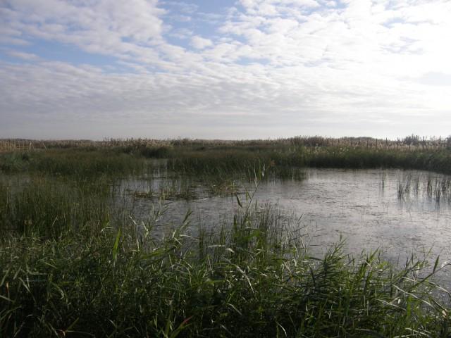La concejalía de Medio Ambiente promociona el parque de El Hondo con motivo del día europeo de los parque naturales