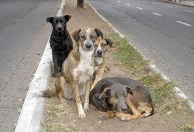 Sanidad saca a licitación la contratación del servicio de recogida de animales abandonados y de dueño conocido