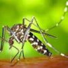 La Concejalía de Sanidad organiza una charla informativa sobre el mosquito tigre